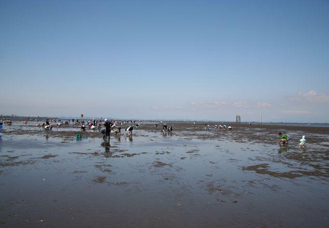 アクアラインからアクセスのよい潮干狩り場・久津間海岸