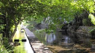 源兵衛川水辺の道