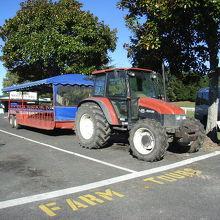 園内をまわるバス