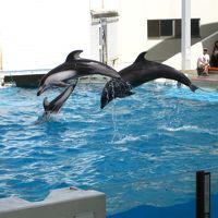 新潟市水族館 マリンピア日本海 写真