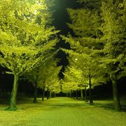 銀杏並木のライトアップ