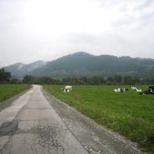 途中にある牧場脇の道。