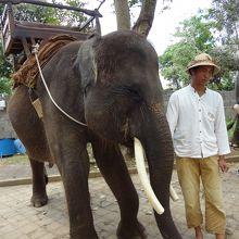 象と象乗りさん