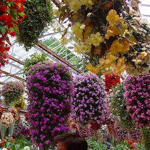 花のドーム