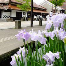 山陰の小京都 津和野 殿町通りを散策〜白壁と塀と錦鯉