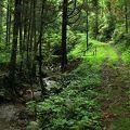 写真:奥山自然遊歩道