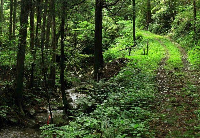 奥山自然遊歩道