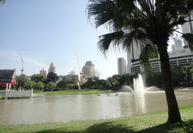 公園には池があります。涼しげです。