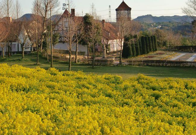 ドイツ風建物をバックに、菜の花畑です