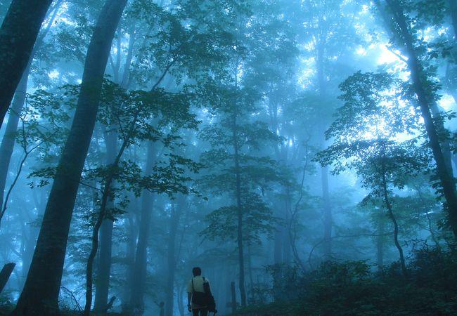 観光 白神 山地 白神山地のおすすめ観光スポット クチコミ人気ランキングTOP20【フォートラベル】