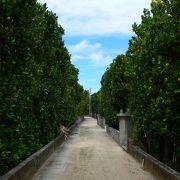 夏季は日帰りも可能。沖縄で2か所しかない重要伝統的建造物群保存地区指定の美しい家並みが残る島。