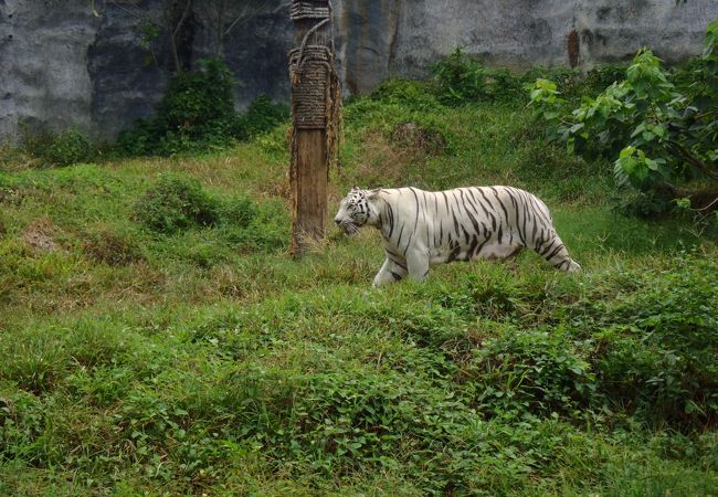 ソンクラー動物園