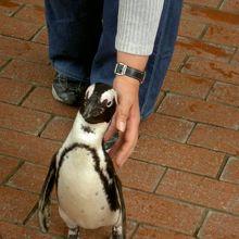 ペンギンがお出迎え