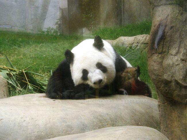 パンダが本当に可愛いですね!
