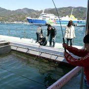 フィッシングパークTOI(トイ)の魚釣り