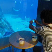 お魚を見ながらカフェでゆっくり