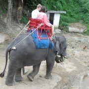 タイに来たら象!