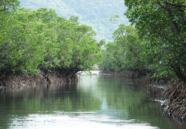 西表島マングローブ