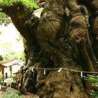 来宮神社 写真