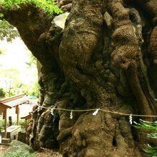 来宮神社(静岡県熱海市)