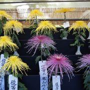 丹精込めた菊には受賞した席次が入っていて、競技がはげみになっていることもうかがえました