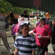 ここででも象のショーが・・・ プーケット動物園
