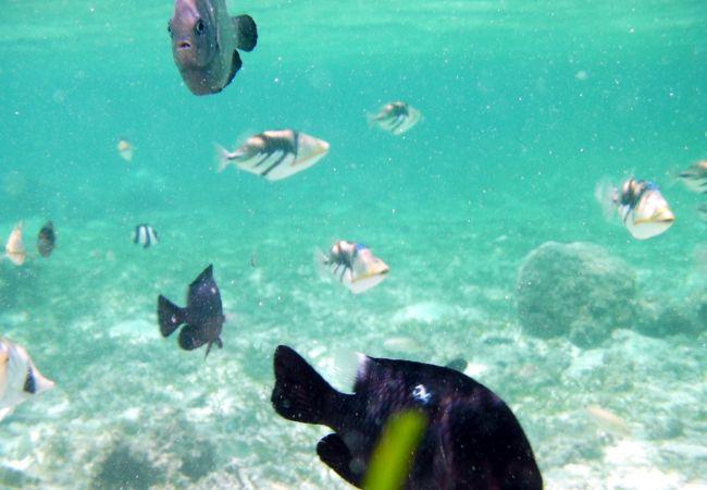 透明度の高い海と、熱帯魚