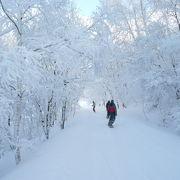 雪質が良く特に裏山タコチコースが面白い