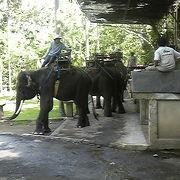 スマトラ象に乗る貴重た体験ができました