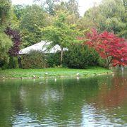 ミュンヘンに日本庭園と茶室がある