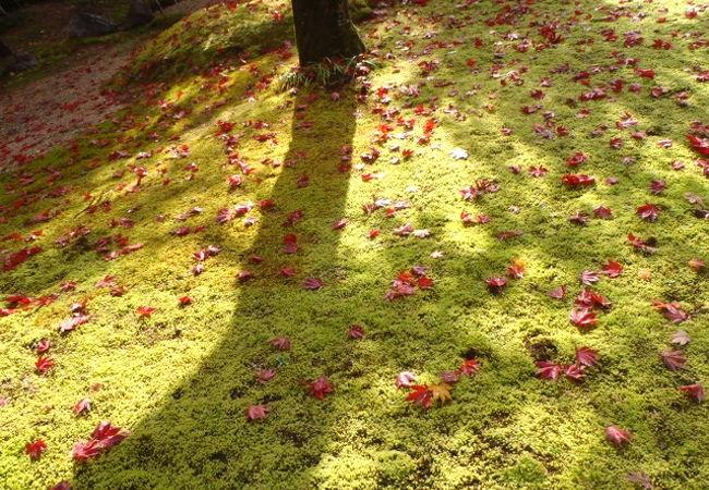 湖北で静かに紅葉を楽しもう 近江孤篷庵