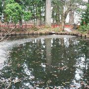 「池の御霊」と呼ばれている出羽三山神社の鏡池