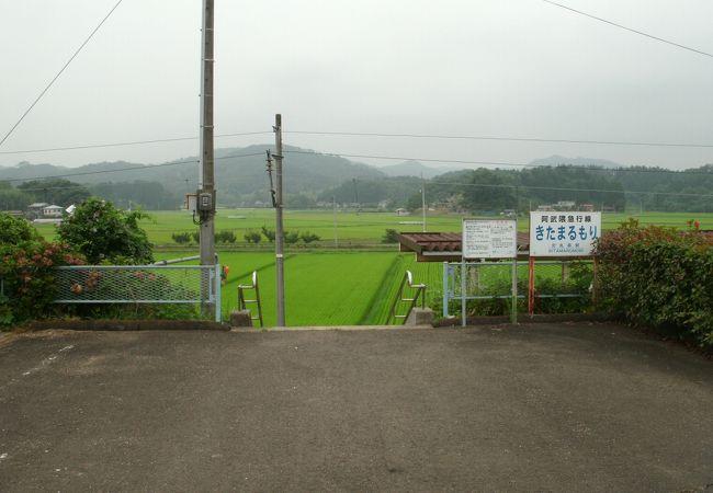 水田を見下ろします