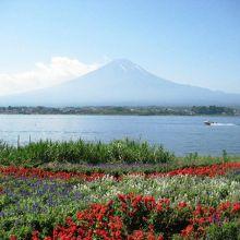 湖畔のラベンダーと富士