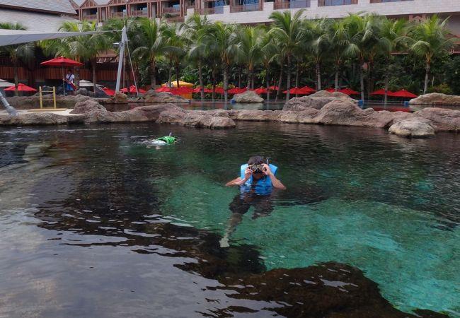 お魚と一緒にシュノーケリングできるプール
