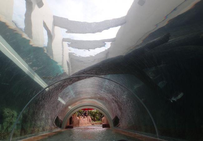流れるプールの上を魚が泳ぐトンネル