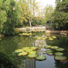 人民公園(上海)