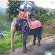 象のりは子供達大喜び!