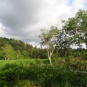 勇駒別(ゆこまんべつ)湿原の自然探勝路を歩きました