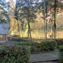 林の中のキャンプ場