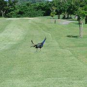 南国ゴルフ
