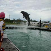 イルカとふれあい体験