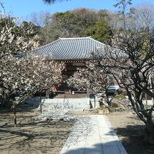 地福寺本堂境内(この左手前に島崎夫妻の墓あり)