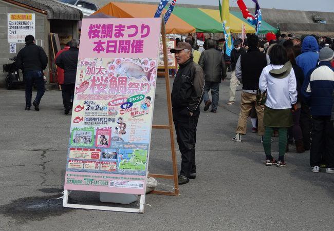 毎年3月上旬に行われます。脂ののった獲れたての桜鯛を購入できます。