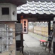 上野東照宮ぼたん苑  ~上野公園~