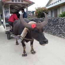 水牛車観光
