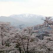 桜のスポットです