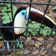 珍しい鳥を間近に見られる!