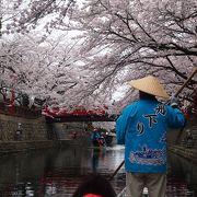 桜を眺めながらの舟旅