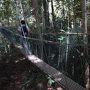 ジャングルツアーがGood